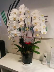 杉本さん、お花ありがとうございます。